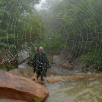Spider web 2004