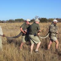 Snake rescue, 2008