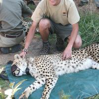 Cheetah-Darting-with-students